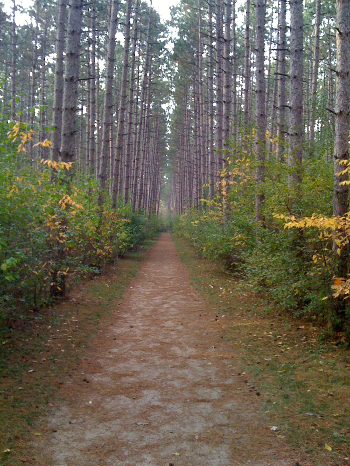 Scuppernog Trail in the Fall